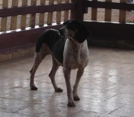 Nunca había visto tantos perros simpáticos como en El Sordo